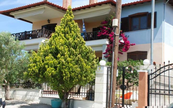 Home Lemon Tree